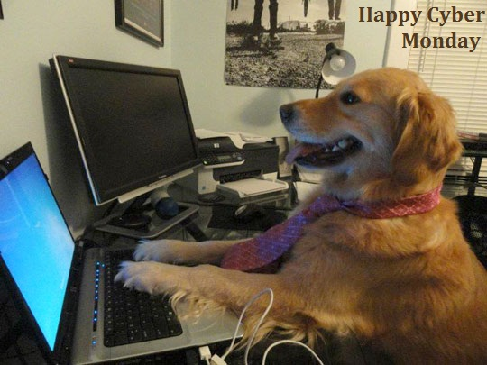 Cyber-Monday-2013-HD-Wallpapers-Funny-Photos-Dog